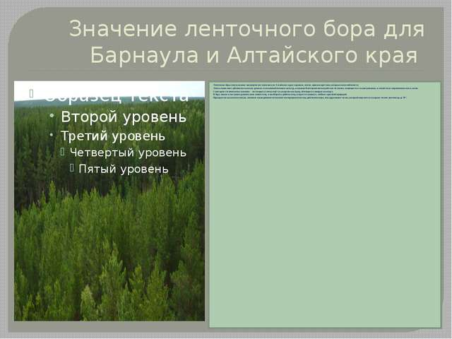 Ленточные боры имели важное экономическое значение для Алтайского края: корми...