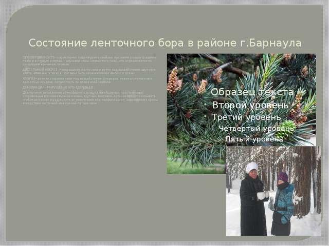 Состояние ленточного бора в районе г.Барнаула СУХОВЕРШИННОСТЬ - характерное п...