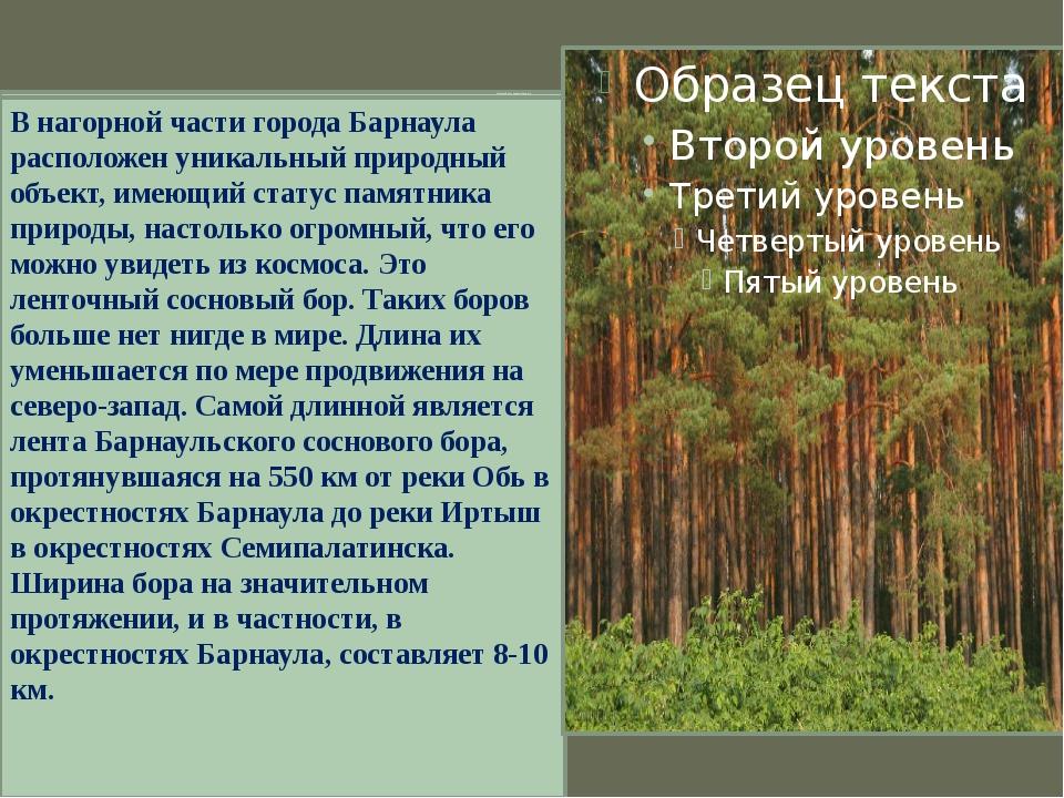 Ленточный бор – бесценный дар для края. В нагорной части города Барнаула расп...