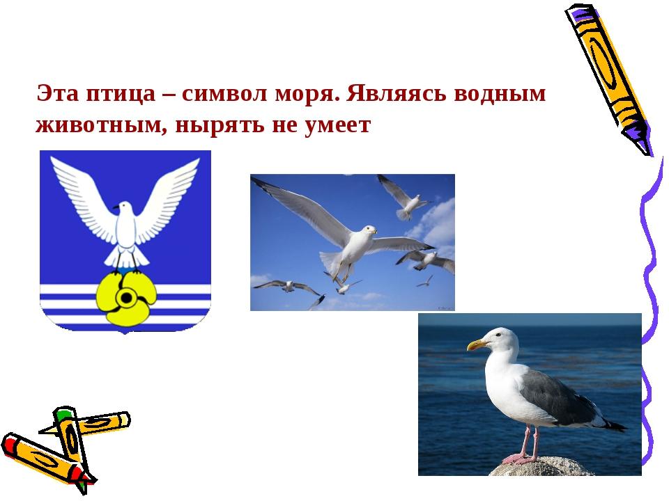 Эта птица – символ моря. Являясь водным животным, нырять не умеет