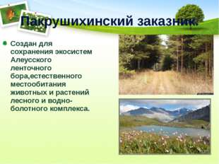 Пакрушихинский заказник. Создан для сохранения экосистем Алеусского ленточног