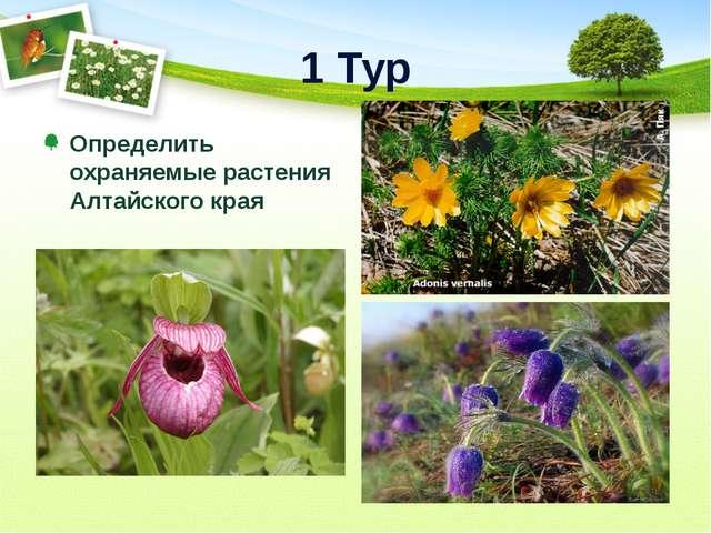 1 Тур Определить охраняемые растения Алтайского края