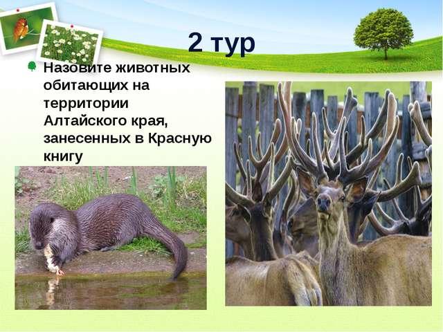 2 тур Назовите животных обитающих на территории Алтайского края, занесенных в...