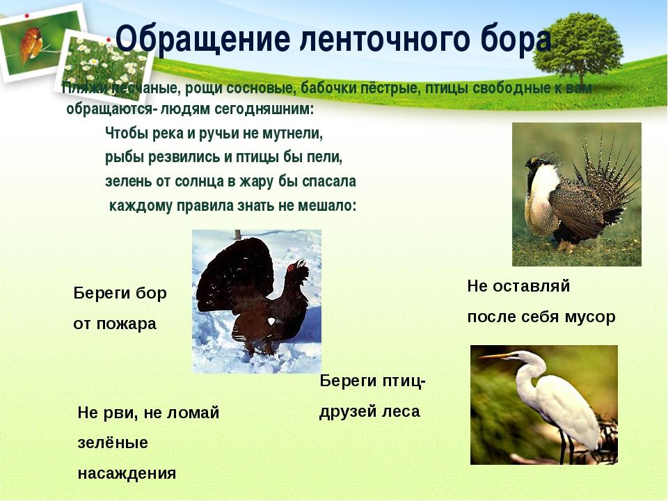Обращение ленточного бора Пляжи песчаные, рощи сосновые, бабочки пёстрые, пти...