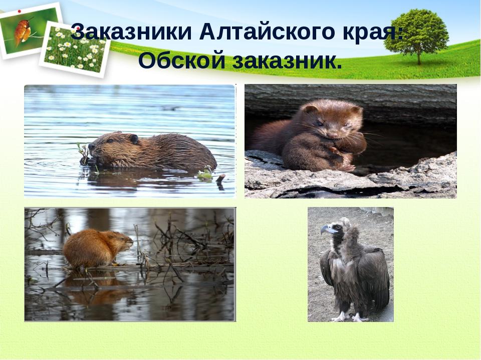 Заказники Алтайского края: Обской заказник.