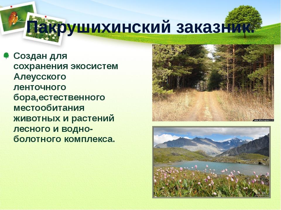 Пакрушихинский заказник. Создан для сохранения экосистем Алеусского ленточног...