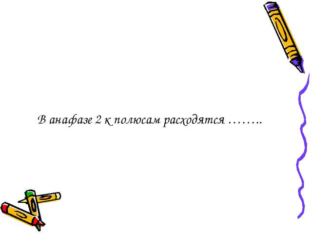В анафазе 2 к полюсам расходятся ……..
