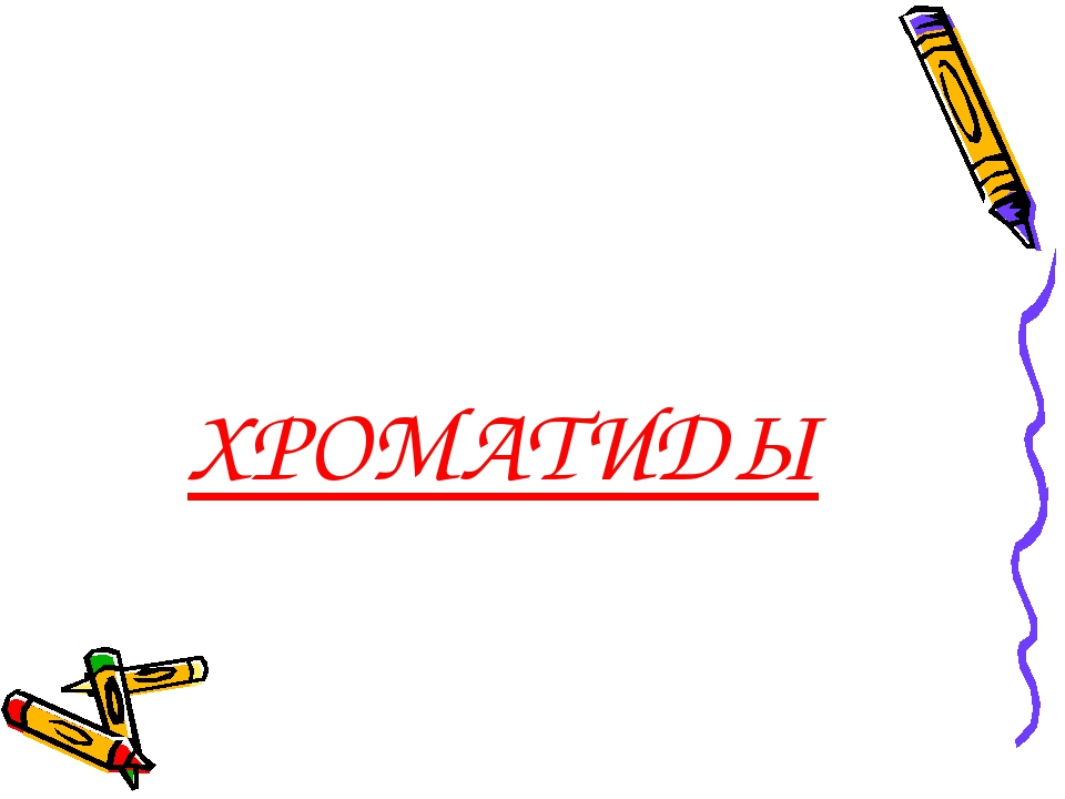 ХРОМАТИДЫ