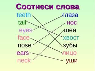 Соотнеси слова teeth глаза tail нос eyes шея face хвост nose зубы ears лицо