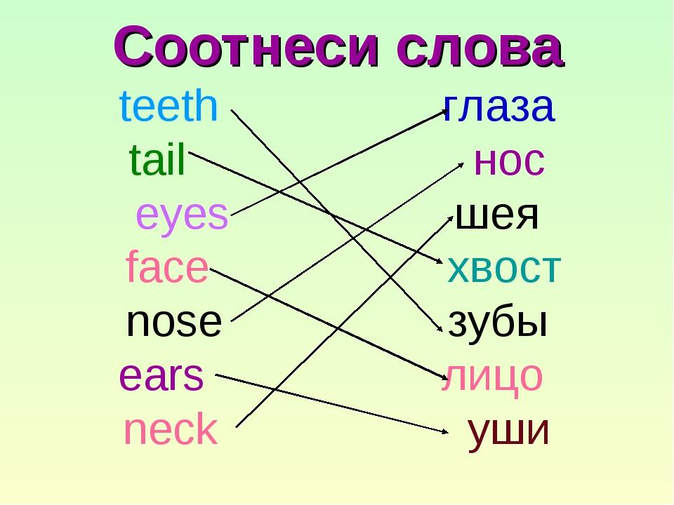 Соотнеси слова teeth глаза tail нос eyes шея face хвост nose зубы ears лицо...
