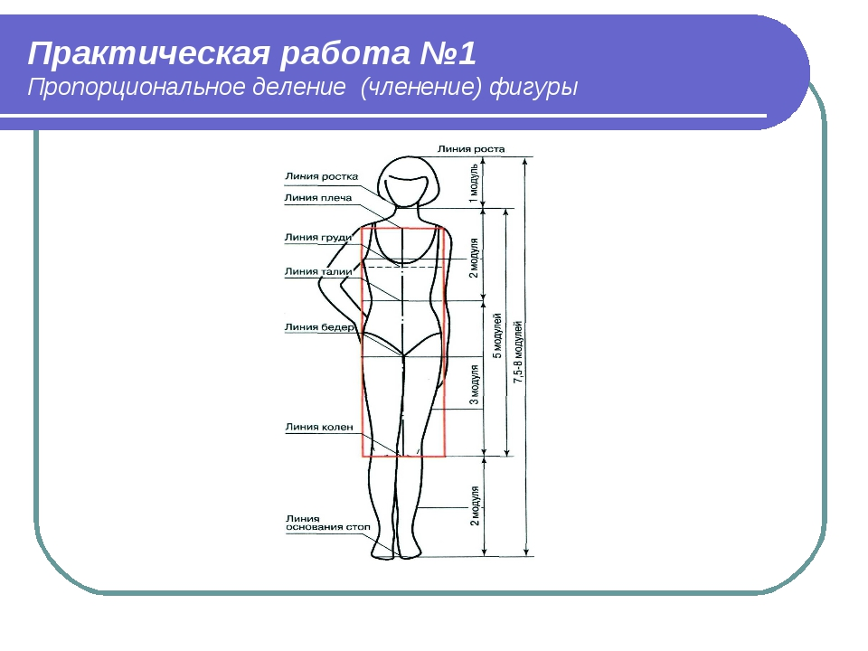 Практическая работа №1 Пропорциональное деление (членение) фигуры