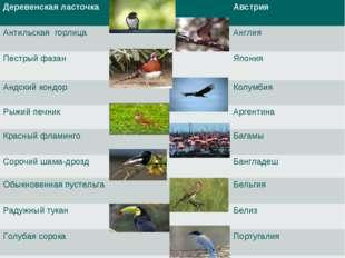 Деревенская ласточкаАвстрия Антильская горлицаАнглия Пестрый фазанЯпон