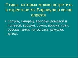 Птицы, которых можно встретить в окрестностях Барнаула в конце апреля Голубь,