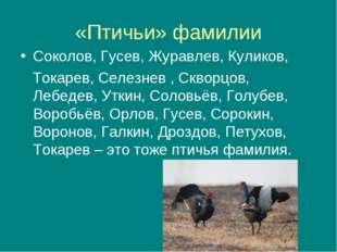 «Птичьи» фамилии Соколов, Гусев, Журавлев, Куликов, Токарев, Селезнев , Сквор