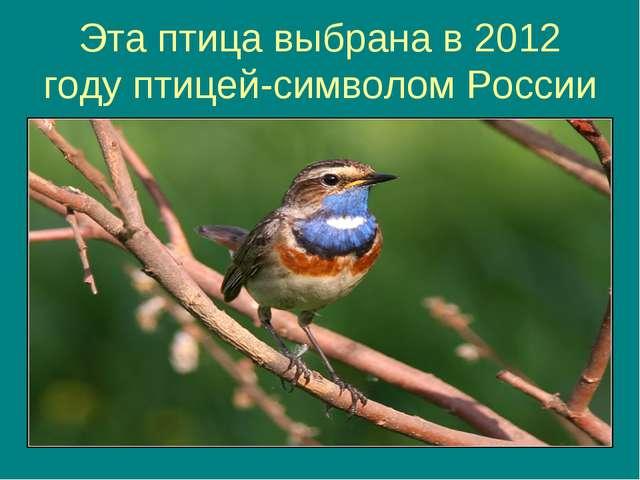 Эта птица выбрана в 2012 году птицей-символом России