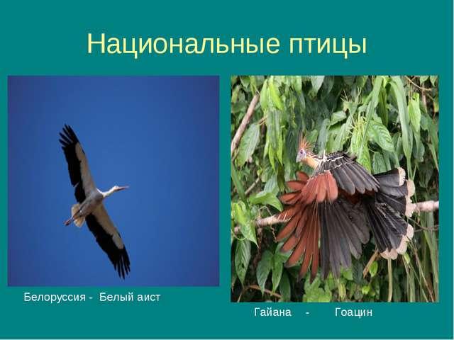 Национальные птицы Белоруссия - Белый аист Гайана - Гоацин