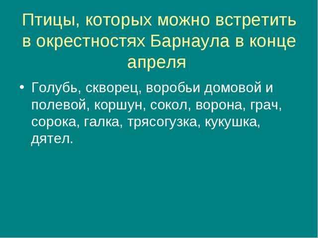 Птицы, которых можно встретить в окрестностях Барнаула в конце апреля Голубь,...