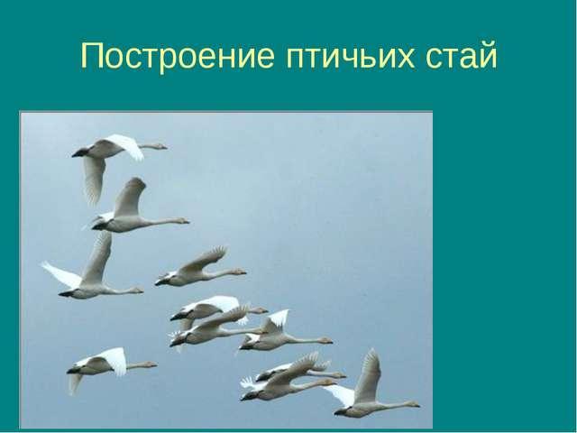 Построение птичьих стай
