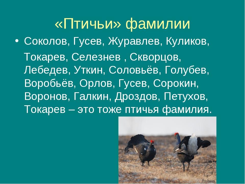 «Птичьи» фамилии Соколов, Гусев, Журавлев, Куликов, Токарев, Селезнев , Сквор...
