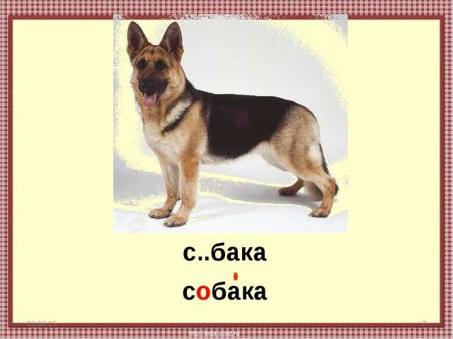 * * с..бака собака