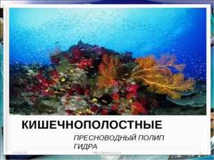 ТИП КИШЕЧНОПОЛОСТНЫЕ ПРЕСНОВОДНЫЙ ПОЛИП ГИДРА * http://aida.ucoz.ru * http://
