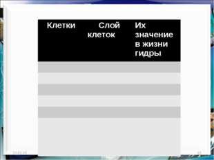 * http://aida.ucoz.ru * Клетки Слой клетокИх значение в жизни гидры