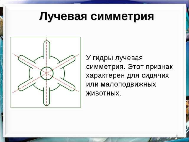 * Лучевая симметрия У гидры лучевая симметрия. Этот признак характерен для си...