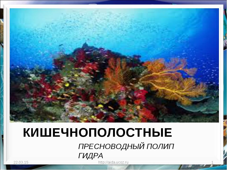 ТИП КИШЕЧНОПОЛОСТНЫЕ ПРЕСНОВОДНЫЙ ПОЛИП ГИДРА * http://aida.ucoz.ru * http://...