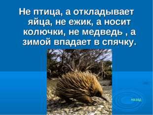 Не птица, а откладывает яйца, не ежик, а носит колючки, не медведь , а зимой