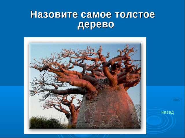 Назовите самое толстое дерево назад