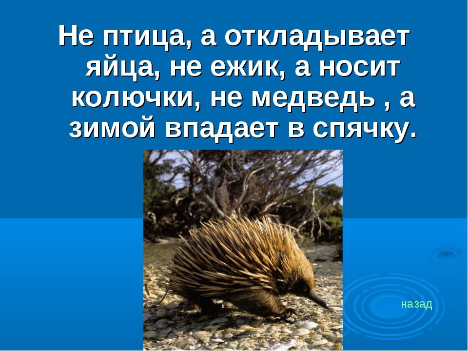 Не птица, а откладывает яйца, не ежик, а носит колючки, не медведь , а зимой...
