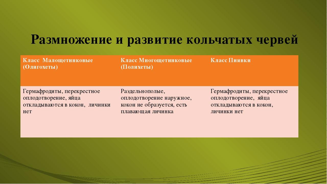 Размножение и развитие кольчатых червей Класс Малощетинковые (Олигохеты) Клас...