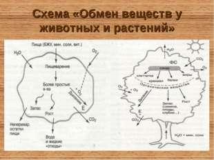 Схема «Обмен веществ у животных и растений»