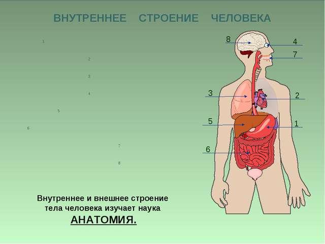 Презентация по окружающему миру на тему Организм человека класс ВНУТРЕННЕЕ СТРОЕНИЕ ЧЕЛОВЕКА Внутреннее и внешнее строение тела человека изуч