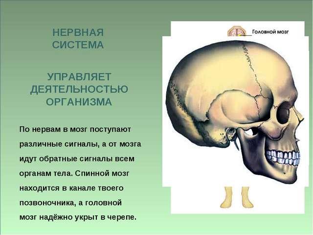 По нервам в мозг поступают различные сигналы, а от мозга идут обратные сигнал...