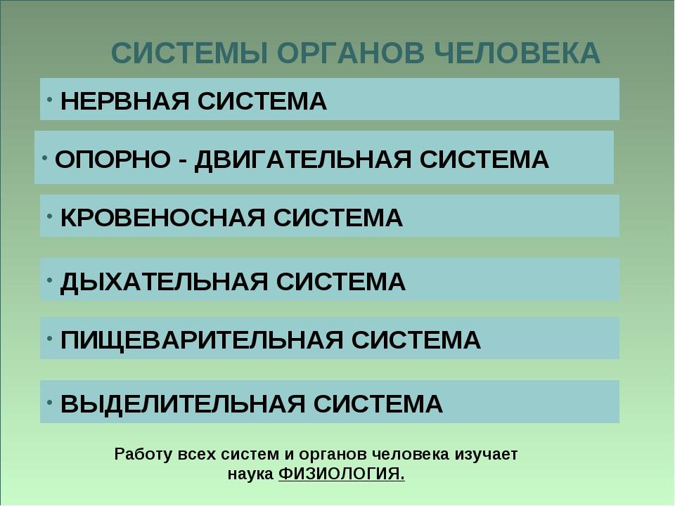 СИСТЕМЫ ОРГАНОВ ЧЕЛОВЕКА НЕРВНАЯ СИСТЕМА ОПОРНО - ДВИГАТЕЛЬНАЯ СИСТЕМА КРОВЕН...