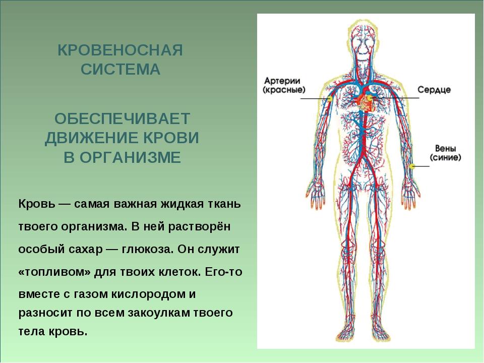 Кровь — самая важная жидкая ткань твоего организма. В ней растворён особый са...