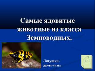 Самые ядовитые животные из класса Земноводных. Лягушки-древолазы