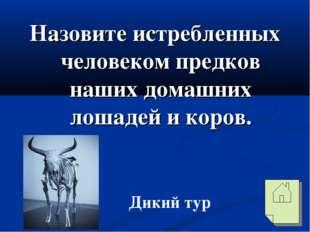Назовите истребленных человеком предков наших домашних лошадей и коров. Дикий