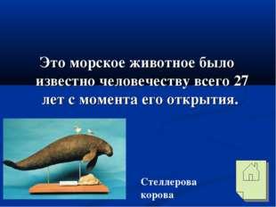 Это морское животное было известно человечеству всего 27 лет с момента его о