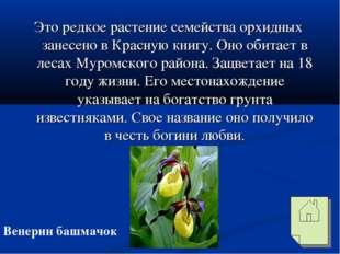 Это редкое растение семейства орхидных занесено в Красную книгу. Оно обитает