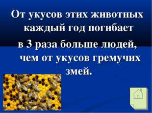 От укусов этих животных каждый год погибает в 3 раза больше людей, чем от уку