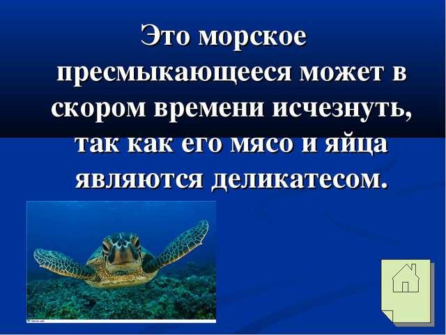 Это морское пресмыкающееся может в скором времени исчезнуть, так как его мясо...