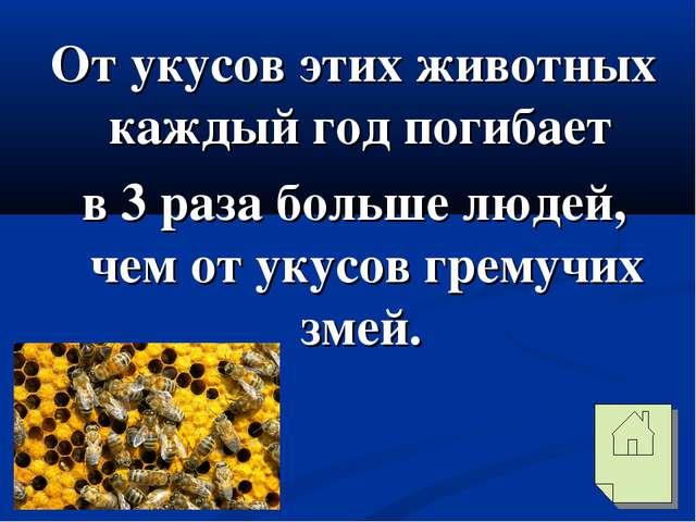 От укусов этих животных каждый год погибает в 3 раза больше людей, чем от уку...