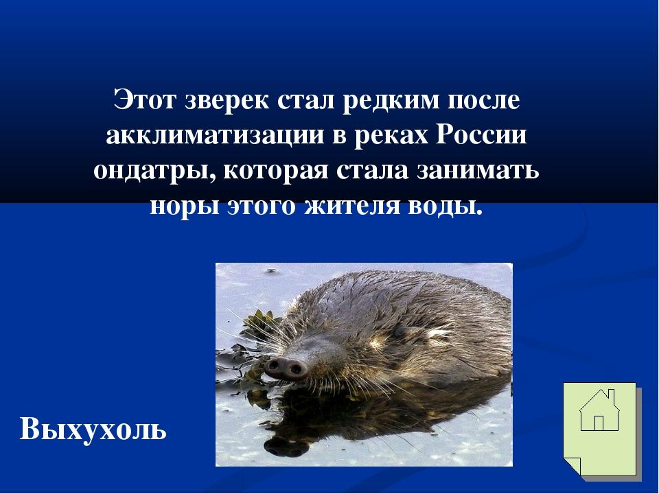Этот зверек стал редким после акклиматизации в реках России ондатры, которая...