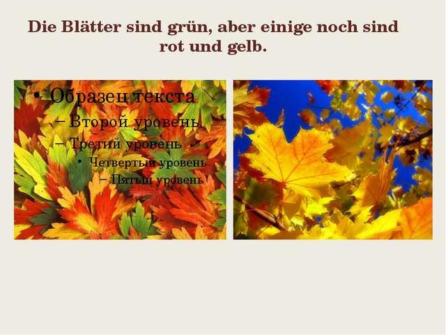 Die Blätter sind grün, aber einige noch sind rot und gelb.
