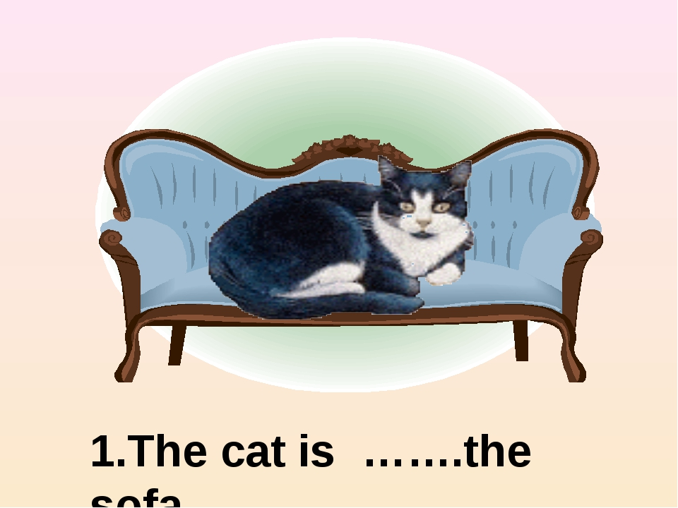 1.The cat is …….the sofa on