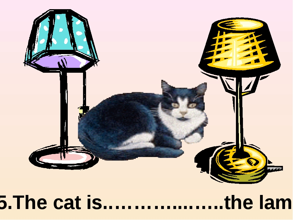 between 5.The cat is..………....…..the lamps.