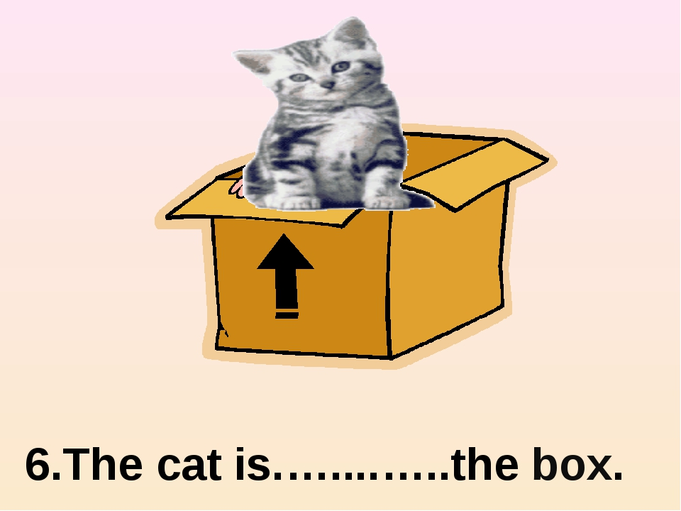 in 6.The cat is.…....…..the box.