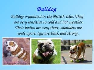 Bulldog Bulldog originated in the British Isles. They are very sensitive to c